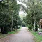 Der Hauptweg des Melatenfriedhofs Köln (c) Foto von Susanne Haun
