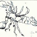 Skorpion 2 - 12 x 17 cm - Tsuche auf Bütten (c) Zeichnung von Susanne Haun