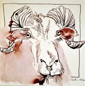 Ziege - 20 x 20 cm - Tusche auf Bütten (c) Zeichnung von Susanne Haun