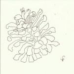 Zapfen Version 6 (c) Zeichnung von Susanne Haun