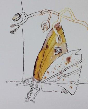 Orchidee und Schmetterling - Ausschnitt 1 - 65 x 50 cm (c) Zeichnung von Susanne Haun