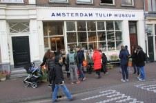 Tulpenmuseum in Amsterdam (c) Foto von Susanne Haun
