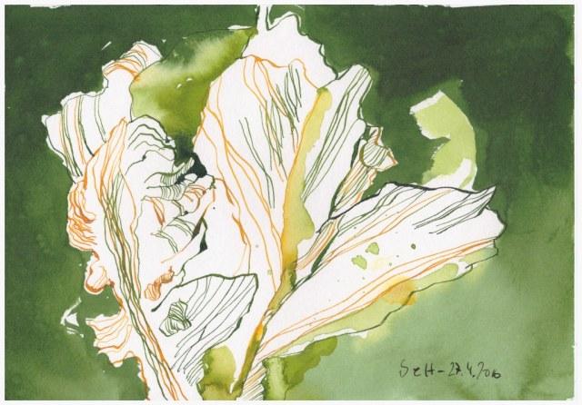 Tulpen bringen den Frühling (c) Zeichnung von Susanne Haun