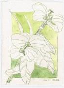 Blumen aus dem Kew Garden - 20 x 15 cm - Tusche auf Bütten (c) Zeichnung von Susanne Haun