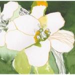 Weiße Blumen am Wegesrand (c) Zeichnung von Susanne Haun