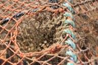 Fischernetze, Hummerfangkörbe (c) Foto von Susanne Haun