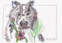 Entstehung Leopold der Hirtenhund (c) Zeichnung von Susanne Haun