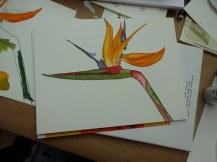 Es entstehen viele farbenprächtige Zeichnungen mit Tusche (c) Foto von Susanne Haun