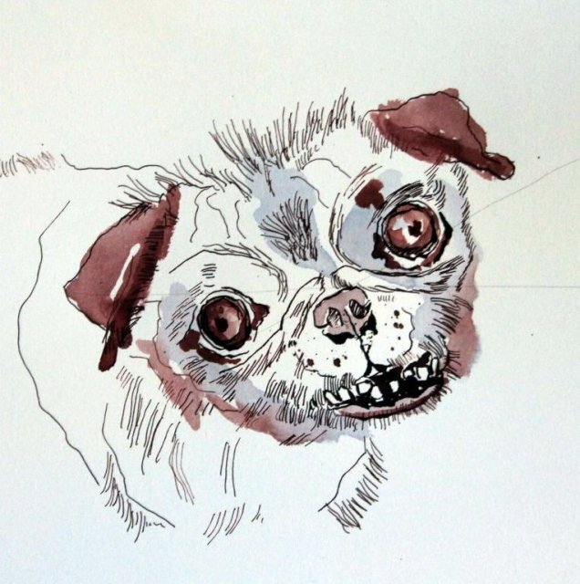 Mops Portrait - Version 1 - 30 x 30 cm - Tusche auf Aquarellkarton (c) Zeichnung von Susanne Haun