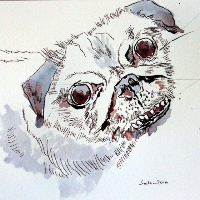 Mops Portrait - Version 2 - 30 x 30 cm - Tusche auf Aquarellkarton (c) Zeichnung von Susanne Haun