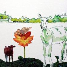 1 Ziege - Cover – 30 x 40 cm – Tusche auf Bütten (c) Zeichnung – Collage von Susanne Haun