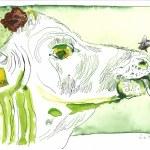 3 Kopf einer Kuh - 30 x 40 cm - Tusche auf Bütten (c) Zeichnung - Collage von Susanne Haun