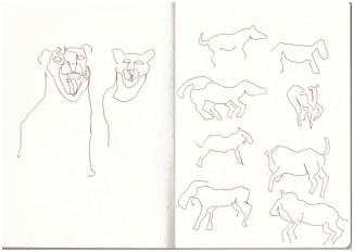 Im Zoo - Gepard - Zebra (c) Zeichnung von Susanne Haun