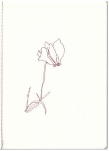 Sizilien - Veilchen (c) Zeichnung von Susanne Haun