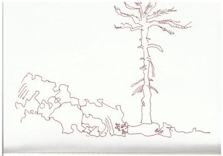 Sizilien - Skizzenbuch 2 - Etna Nord (c) Zeichnung von Susanne Haun