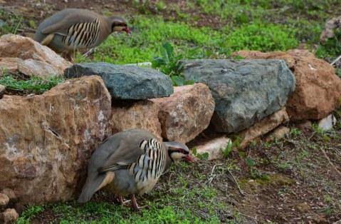 Vögel am südlichsten Punkt der Attika (c) Foto von M.Fanke