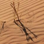 Spuren in der Namib Wueste (c) Foto von Susanne Haun