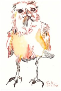 Afrikanische Krähen in der Namib Wueste - 26 x 18 cm - Tusche auf Hahnemühle Aquarellkarton (c) Zeichnung von Susanne Haun