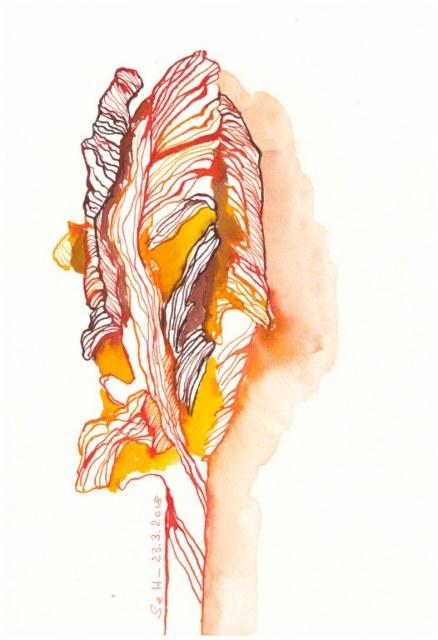 Doreens Tulpen in rot - 26 x 18 cm - Tusche auf Hahnemühle Aquarellkarton (c) Zeichnung von Susanne Haun