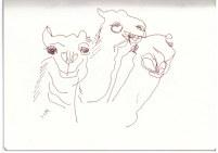 Kamele in der Wüste (c) Zeichnung von Susanne Haun