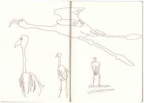 Namibia - Flamingos in Walvis Bay (c) Zeichnung von Susanne Haun