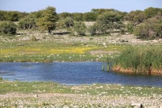 Etosha Nationalpark (c) Foto von Susanne Haun
