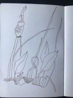 Gräser aus Papas Garten (c) Zeichnung von Susanne Haun