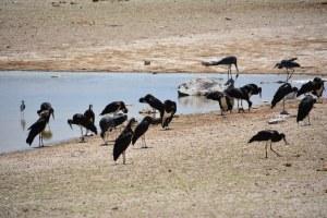 An einem der vielen Wasserlöchern im Etosha Nationalpark (c) Foto von M.Fanke