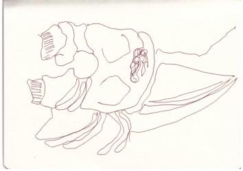 Gerissenes Vieh um Spitzkoppe herum (c) Zeichnung von Susanne Haun