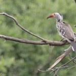 Auch im Chobe Park sind viele Vögel zu sehen (c) Foto von Susanne Haun