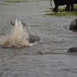 Elefanten beim Wasser im Chobe Nationalpark in Botswana (c) Foto von M. Fanke
