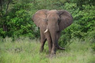 Auch Elefanten sind am Strassenrand zu sehen (c) Foto von M.Fanke
