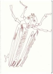 Insekt im Chobe Nationalpark (c) Zeichnung von Susanne Haun