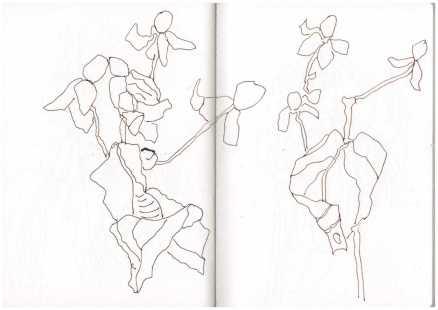 Herbst - Zeichnung von Susanne Haun (c) VG Bild Kunst, Bonn 2008