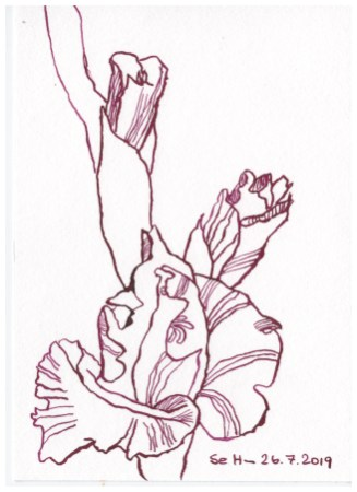 Gladiolen sind die Blume der Waage, 12 x 17 cm, Aquarellkarton, Zeichnung von Susanne Haun (c) VG Bild-Kunst, Bonn 2019