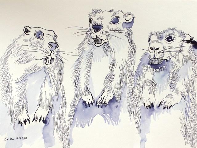 Drei sind einer zuviel - die Erdhörnchen, 30 x 40 cm, Tusche auf Aquarellkarton (c) Zeichnung von Susanne Haun