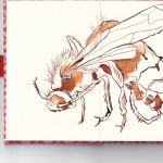 Leporello, Recto S. 3 und 4, 17,5 x 12 cm, Eine kleine Hummel, Zeichnung von Susanne Haun (c) VG Bild-Kunst, Bonn 2020
