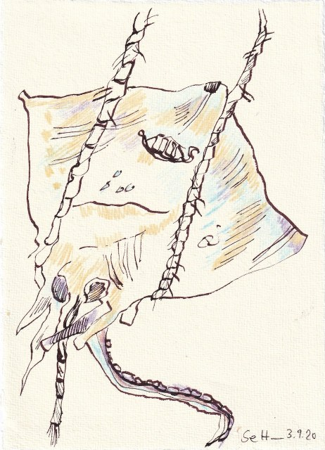 Tagebucheintrag 03.09..2020, Bei rembrandt steppt der Bär - Rochen, 20 x 15 cm, Tinte und Buntstift auf Silberburg Büttenpapier, Zeichnung von Susanne Haun (c) VG Bild-Kunst, Bonn 2020