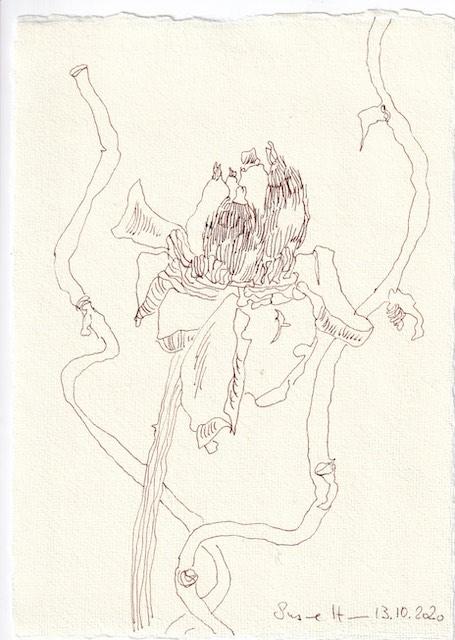 Tagebucheintrag 13.10.2020, Verblüht, 20 x 15 cm, Tinte und Buntstift auf Silberburg Büttenpapier, Zeichnung von Susanne Haun (c) VG Bild-Kunst, Bonn 2020