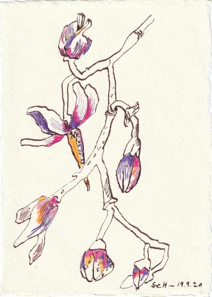 Tagebucheintrag 19.09.2020, Kräftige Blüte in Pink, 20 x 15 cm, Tinte und Buntstift auf Silberburg Büttenpapier, Zeichnung von Susanne Haun (c) VG Bild-Kunst, Bonn 2020