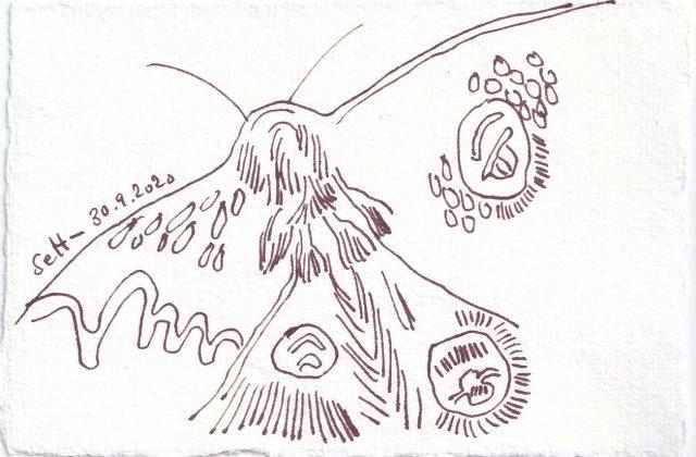 Tagebucheintrag 30.09.2020, Eine kleine Motte, 10 x 15 cm, Tinte und Buntstift auf Silberburg Büttenpapier, Zeichnung von Susanne Haun (c) VG Bild-Kunst, Bonn 2020