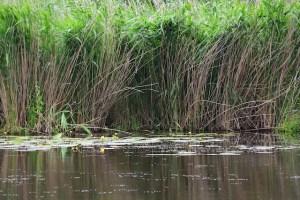 Impressionen aus dem Tegeler Fließ (c) Foto von M.Fanke