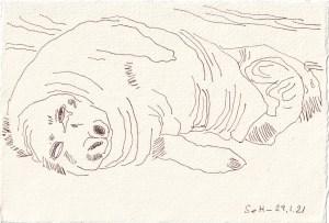 Tagebucheintrag 29.01.2021, View of a Seal, Tired, 20 x 15 cm, Tinte auf Silberburg Büttenpapier, Zeichnung von Susanne Haun (c) VG Bild-Kunst, Bonn 2021