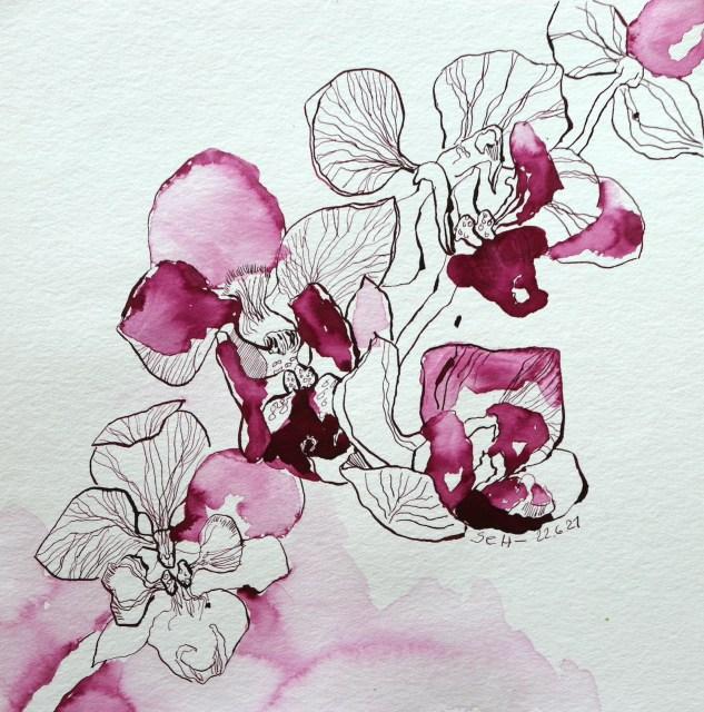 Rosies Orchidee, Tusche auf Aquarellkarton, 25 x 25 cm, Zeichnung von Susanne Haun (c) VG Bild-Kunst, Bonn 2021