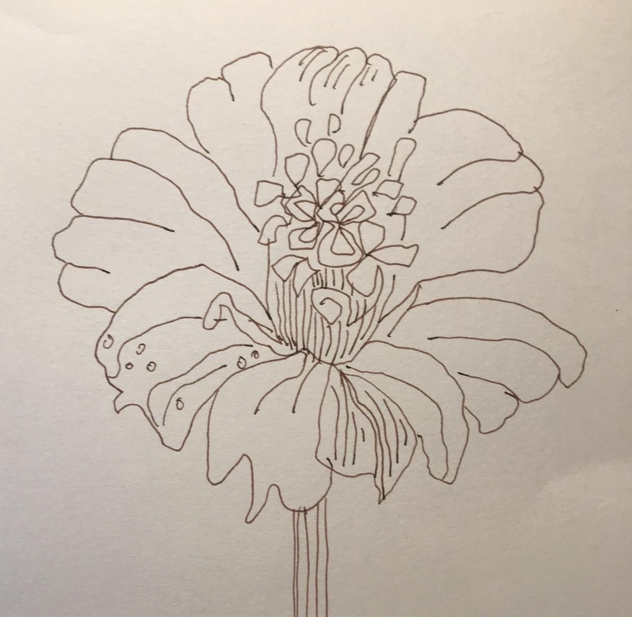 Schokoladenblume, Aus dem Skizzenbuch von Susanne Haun (c) VG Bild-Kunst, Bonn 2021