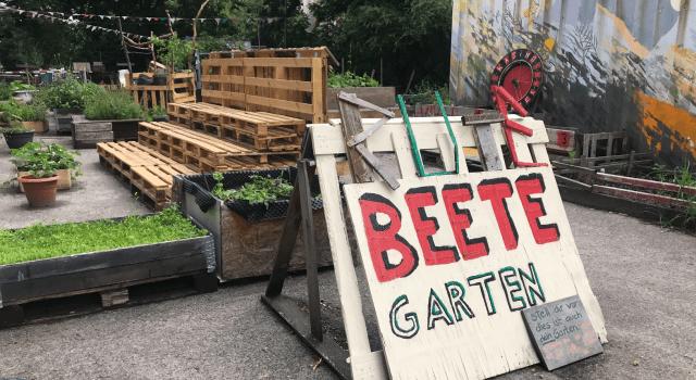 Rote Beete Garten, Foto von Susanne Haun