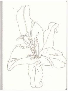 Lilien an Mamas Grab (c) Zeichnung von Susanne Haun -