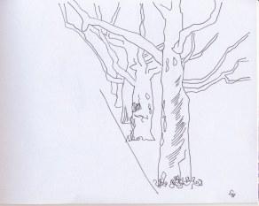 Baumallee (c) Zeichnung von Susanne Haun
