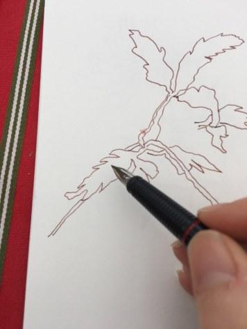 Waldanemonen zeichnen (c) Foto von Susanne Haun