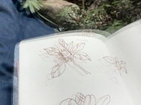 Azalee - Dreifachbelichtung (c) Zeichnung und Foto von Susanne Haun